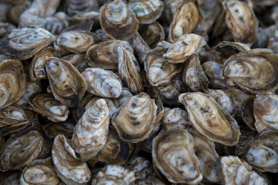 oyster-recycling-header